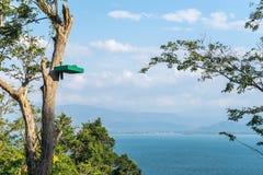Verunreinigen Sie für Affen auf Baum und schöne Seeansicht über vict Lizenzfreies Stockfoto