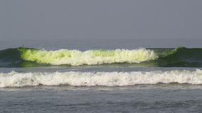 Verunreinigter Algen-Strand lizenzfreies stockbild