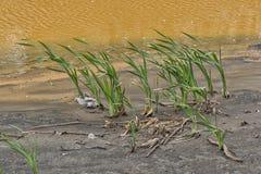Verunreinigter Gelber Fluss 10 Stockfotos