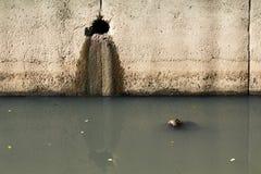 Verunreinigter Kanal Stockfotos