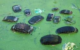 Verunreinigung im Teich Stockfotos