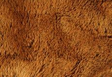 Vervals bruin bont Royalty-vrije Stock Foto's