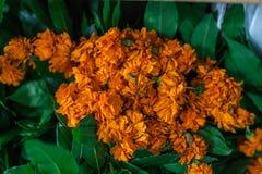 Vervalsing of Imeritinsky-de goudsbloemen van saffraanbloemen stock fotografie