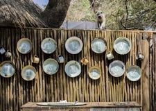 Vervet małpa przegapia brudnych naczynia myje teren fotografia stock