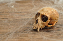 Vervet małpy czaszka zakrywająca z pajęczynami Fotografia Royalty Free