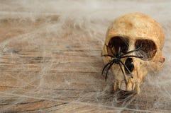 Vervet monkey skull covered with cobwebs Royalty Free Stock Photo