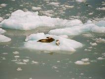 Vervloek dit ijs is koud stock afbeelding