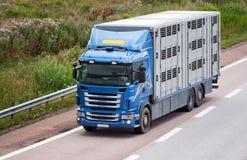 Vervoer van dieren. Stock Foto