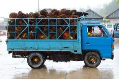 Vervoer van tropische vruchten in Thailand Stock Foto's