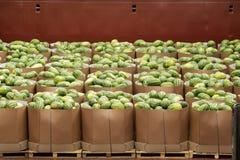 Vervoer, vervoer van watermeloenen in dozen aan de opslag of pakhuis stock afbeeldingen