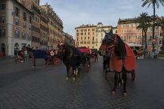 Vervoerpaard in Piazza Di Spagna Stock Foto