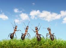Vervollkommnen Sie Arbeitsteamkonzept, Ameisen unter blauem Himmel Stockbilder