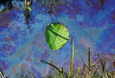 Vervuild water met zwemmend blad Royalty-vrije Stock Afbeelding