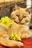 Verwöhnte Katze Stockbild