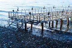 Verwüstetes Dock mit Seemöwen und ruhigem See stockfotografie