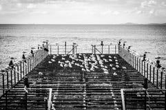 Verwüstetes Dock mit Seemöwen und ruhigem See lizenzfreie stockfotografie