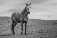 Verwaand Paard stock fotografie