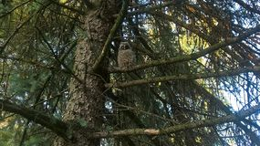 Verwanzte Vögel auf dem Baum lizenzfreies stockfoto