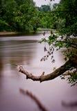 Verwarde rivier Stock Afbeelding