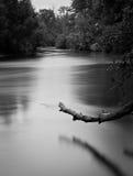 Verwarde rivier Royalty-vrije Stock Foto