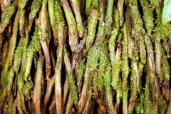 Verwarring van wortels Stock Afbeelding