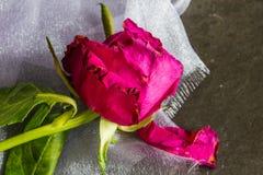 Verwelkt stieg auf Chiffon- Brautgewebe lizenzfreie stockbilder
