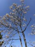 Verwelkte Bäume im Frühjahr lizenzfreie stockfotos