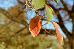Verwelkte Blätter während des Herbstes in nationalem Garten Shinjuku in Tokyo, Japan Stockbild