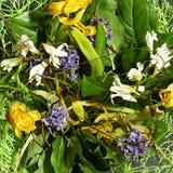 Verwelkte bloemen dicht omhoog Stock Fotografie
