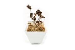 Verwelkte Blumen lizenzfreie stockfotos