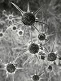 Verwelkte Blumen in greyscale Lizenzfreies Stockbild