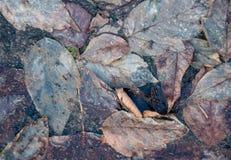 Verwelkte faule Blätter im schmutzigen Schlamm Lizenzfreie Stockfotos