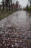 Verwelkte Kirschblumenblumenblätter lizenzfreie stockfotografie
