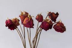 Verwelkte Rosen Stockfotografie