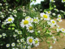 Verwelkte Wildflowers Lizenzfreies Stockfoto