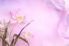 Verwelkte zarte rosa Tulpe und zwei verdrehten Bänder gegen den rosa Steigungsfarbhintergrund Feld gemacht von verdrehten Bändern Stockbild