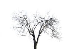 Verwelkte Zweige stockfotos