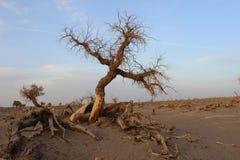 Verwelkter Baum Lizenzfreies Stockbild