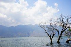 Verwelkter Baum im Meer Stockbilder