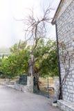 Verwelkter Baum nahe dem Eingang zum Kloster Rezevici in Montenegro Stockbild