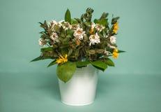Verwelkter Blumenstrauß Stockfoto