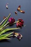 Verwelkter Blumenstrauß auf schwarzer Tabelle Stockbild