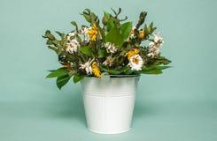 Verwelkter Blumenstrauß im weißen Eimer Lizenzfreies Stockbild