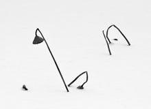 Verwelkter Lotos im Eis und im Schnee stockbilder
