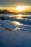 Verwelktes Blatt auf Eis. Stockfotos