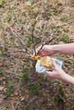 Verwerking van de appelbomen van de tuinent in de lente royalty-vrije stock afbeeldingen