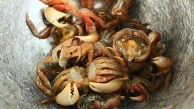 Verwerkingsvoedsel van shrim en krab door mortier en stamper stock footage