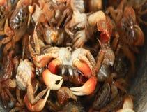 Verwerkingsvoedsel van shrim en krab door mortier en stamper stock video