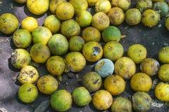 Verwerp sinaasappelen stock afbeelding
