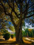 Verwezenlijking van een aard op boom royalty-vrije stock fotografie